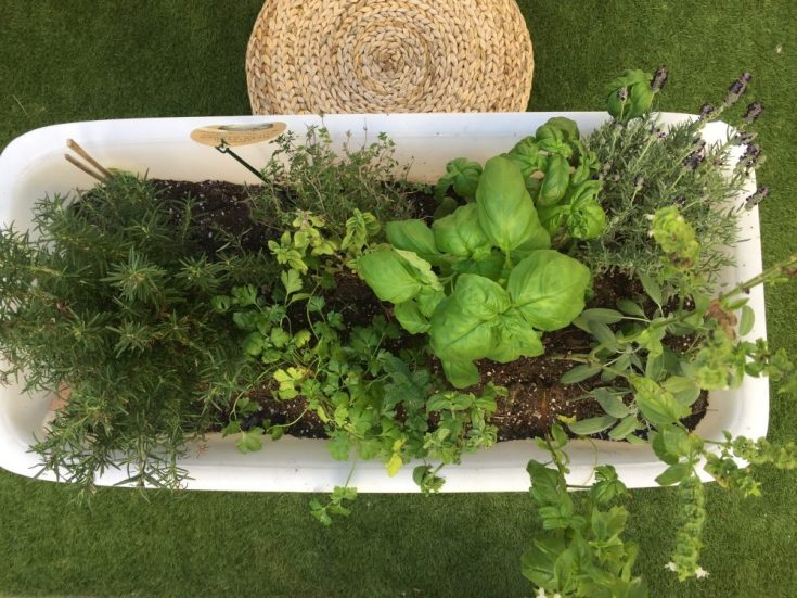 designpastiche.com Planting with kids. Foodmap container filled with herbs from Trader Joe's